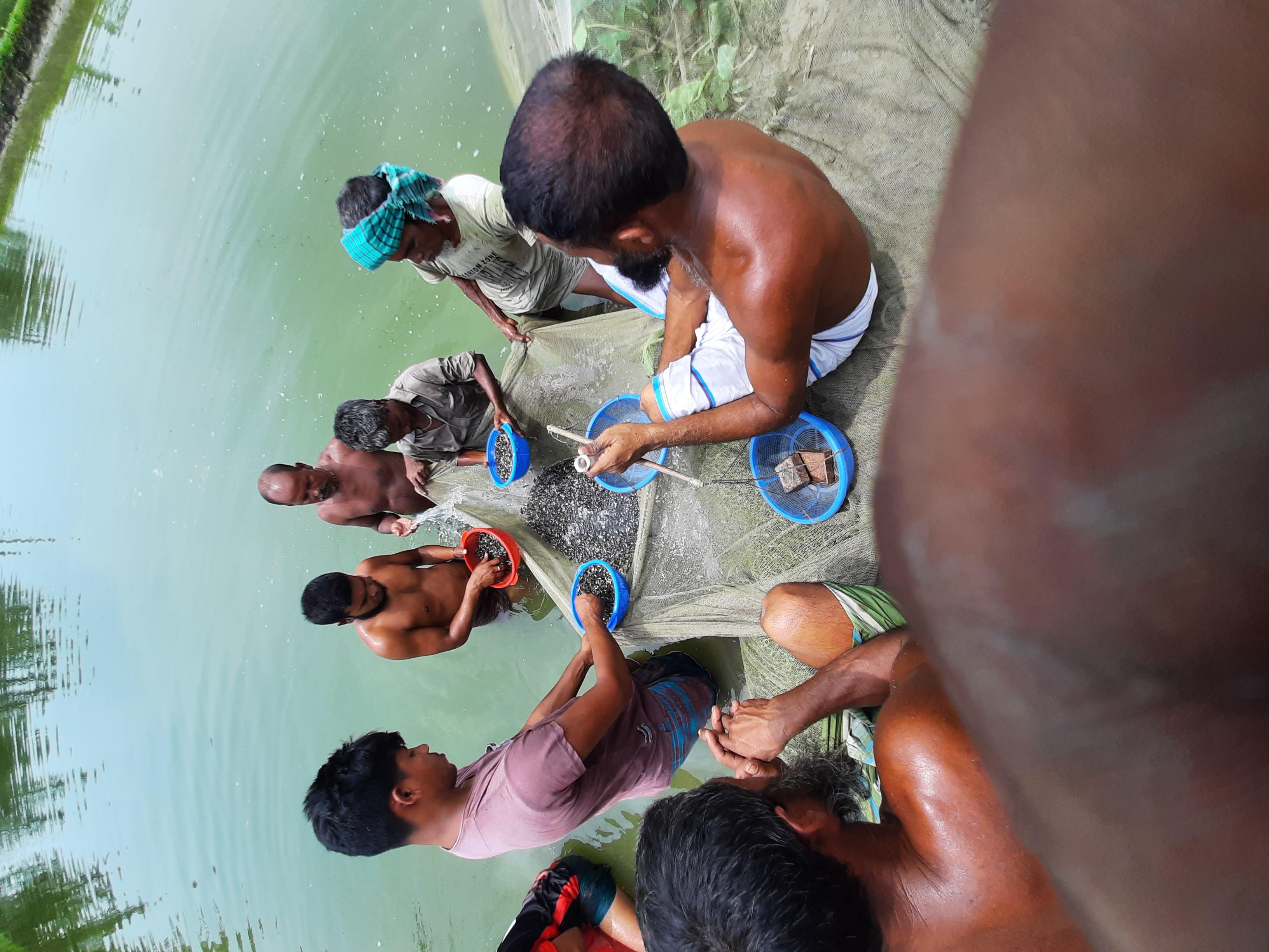 পাবদা গুলশা শিং মাগুর সহ অন্যান্য মাছের পোনা ও মুল্য 2021 post thumbnail image